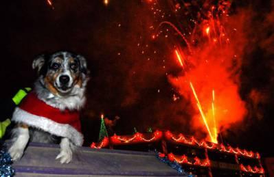 Hond dichtbij het vuurwerk