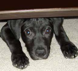 Hond heeft vuurwerkangst en kruip weg onder bank