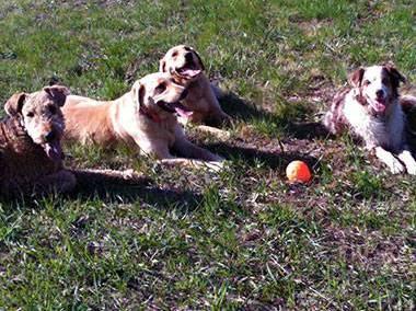 Hondenschool trainen met balletje