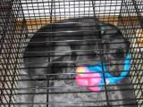 Hondenbench als veilig verblijfplaats voor je hond