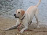 Blaffen en non verbale lichaamstaal bij honden