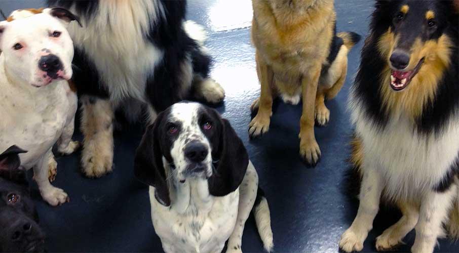 Hondenpoep In Tuin : Hondenpoep in tuin