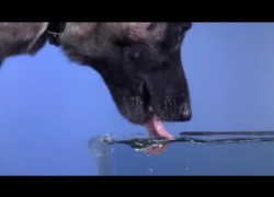 Hond drinkt water