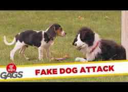 Pluche hond neemt viervoeters in de maling