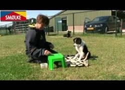 Hoe leer je een honden pup zichzelf beheersen