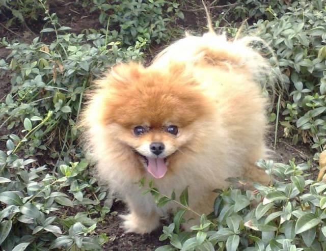 Voorkeur Fotos met honden | Bekijk leuke fotos uit het honden fotoalbum @RS46