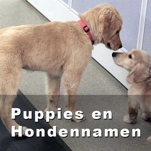 hondennamen - een hondennaam voor puppy of nieuwe hond in huis