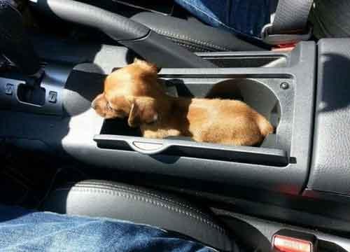 Hondje mag mee met autorijden