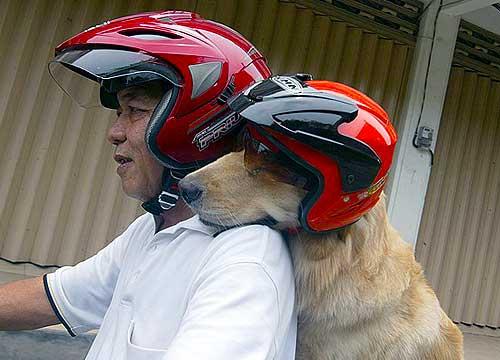 Samen met hond op de brommer