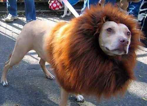 Hond zelf trimmen met tondeuse