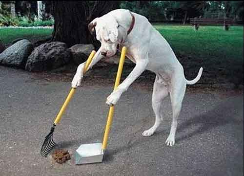 Handige viervoeter ruimt hondenpoep op