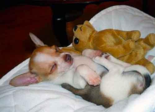 Weltrusten, slaap lekker